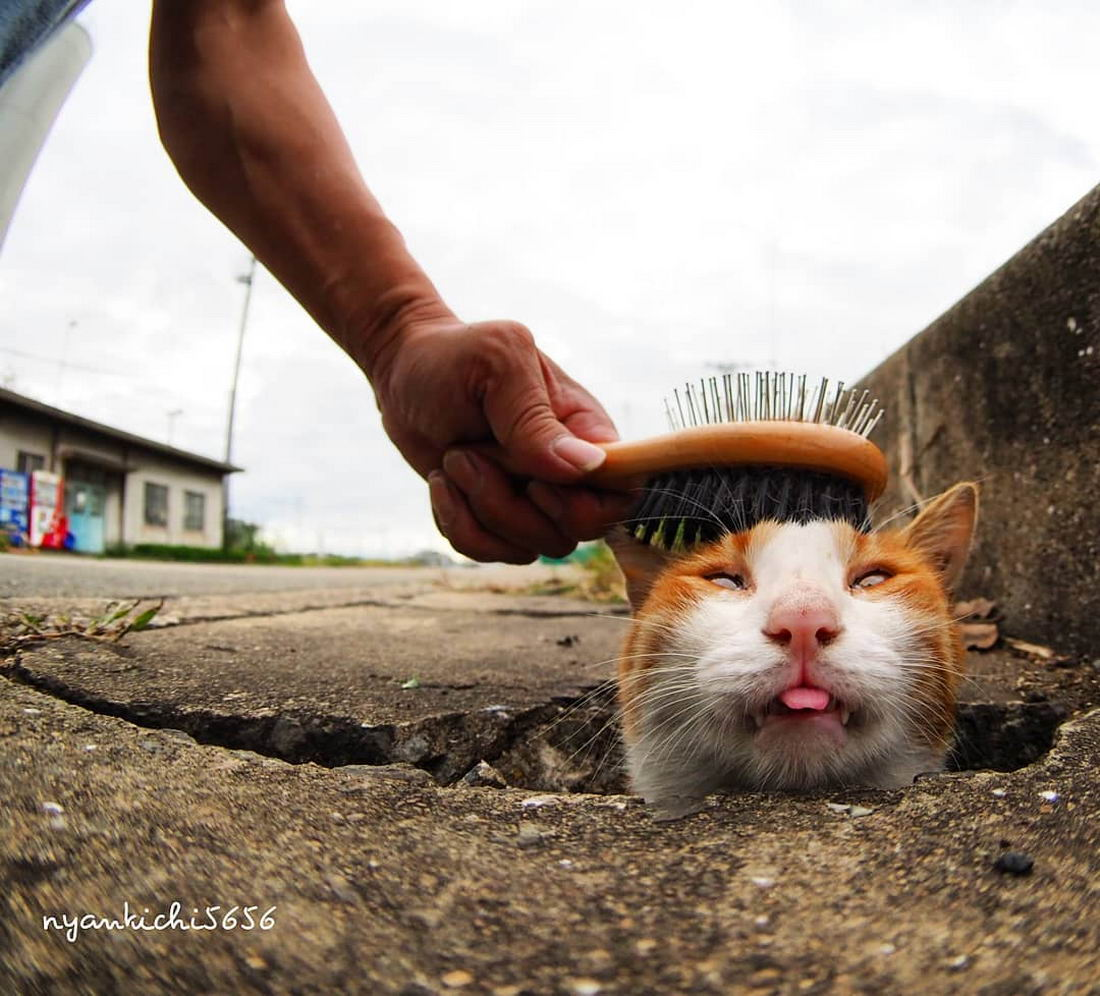Забавные Животные - Funny Animals - 236 (32 фото)