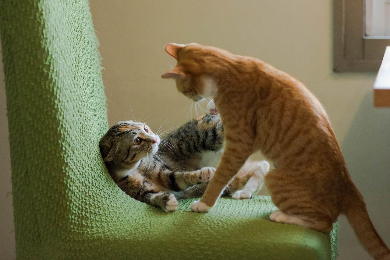 Забавные Животные - Funny Animals - 243 (35 фото)