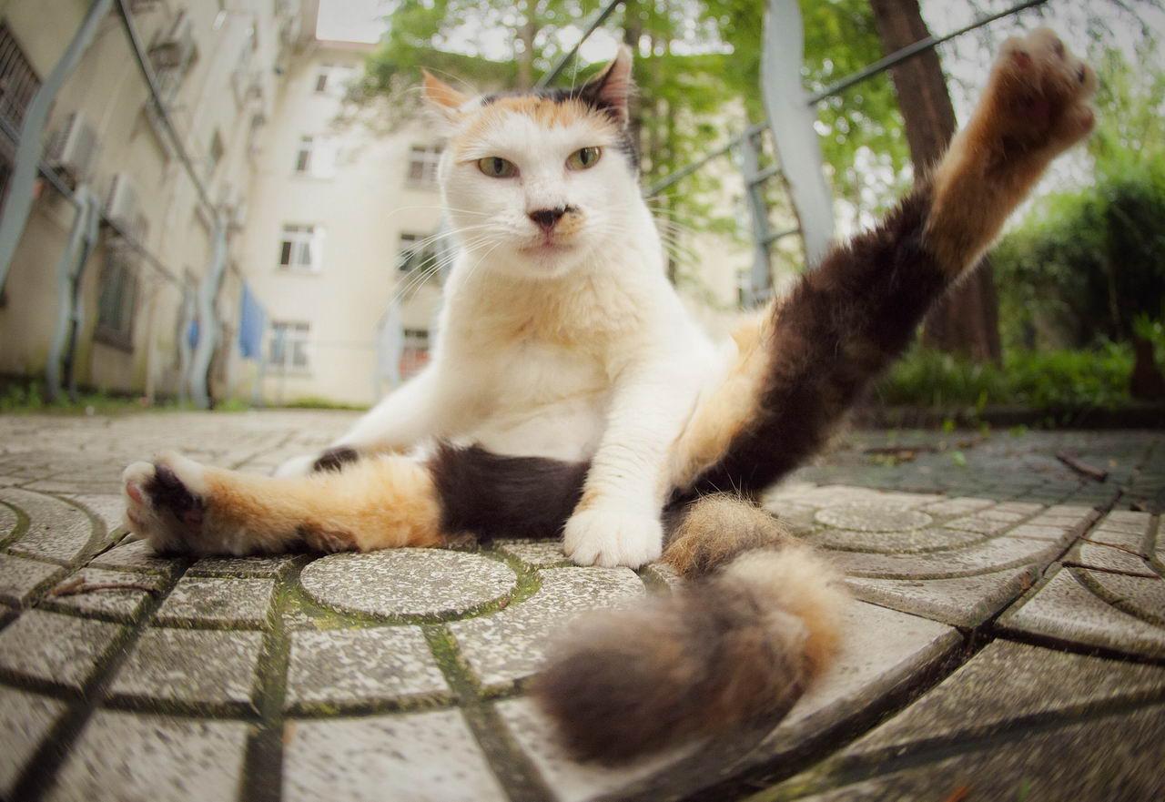Забавные Животные - Funny Animals - 252 (34 фото)