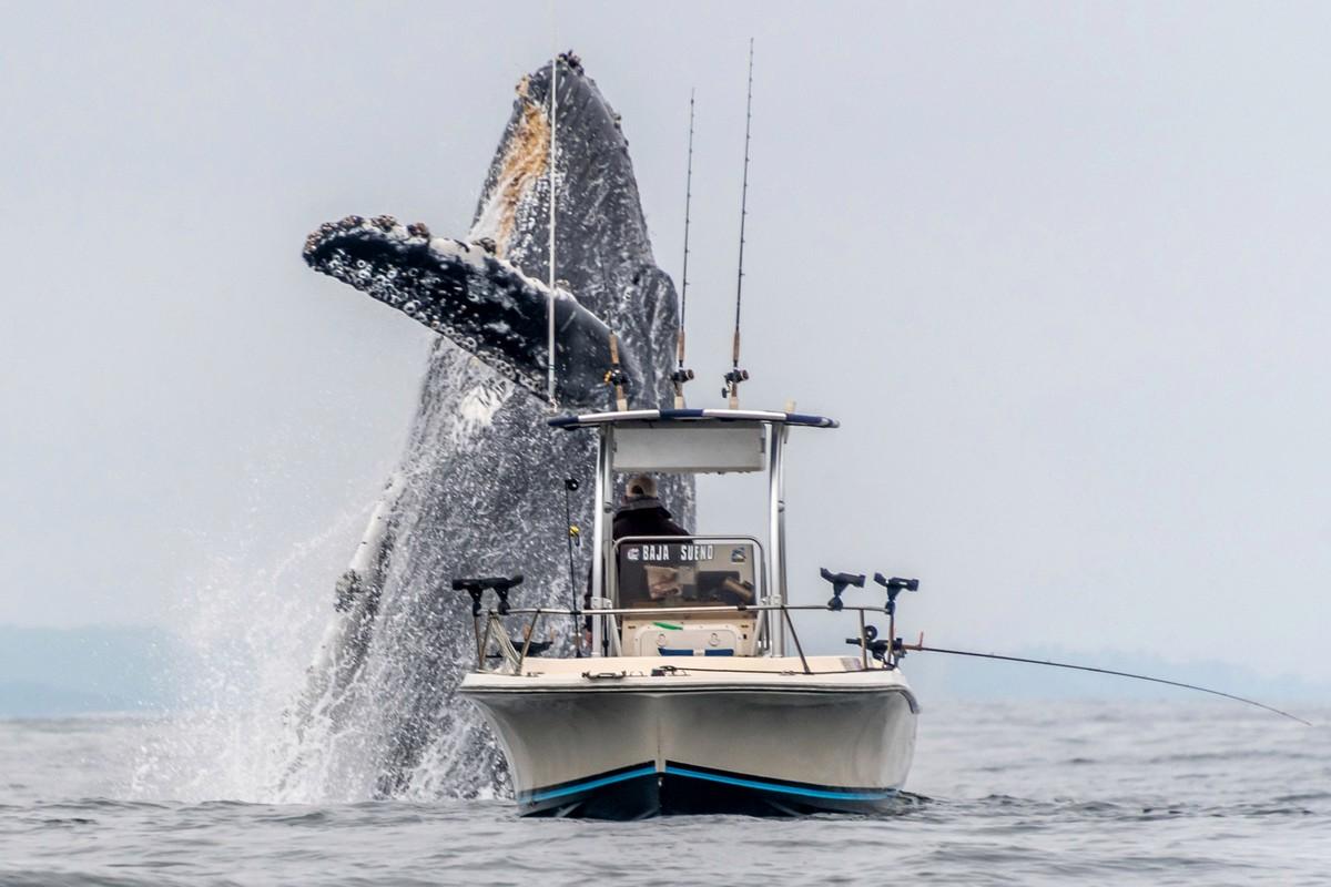 Вынырнувший кит чуть не перевернул рыбацкую лодку (фото + видео)