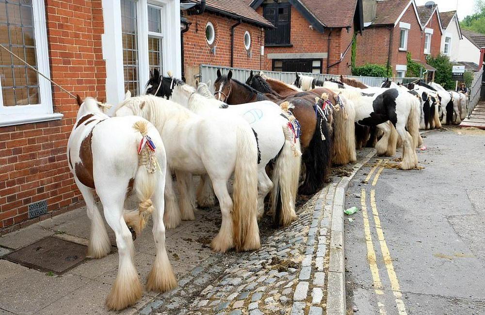Ежегодная конная ярмарка в Уикхеме (40 фото)