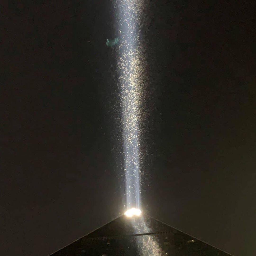 Полчища кузнечиков атаковали Лас-Вегас (фото + видео)