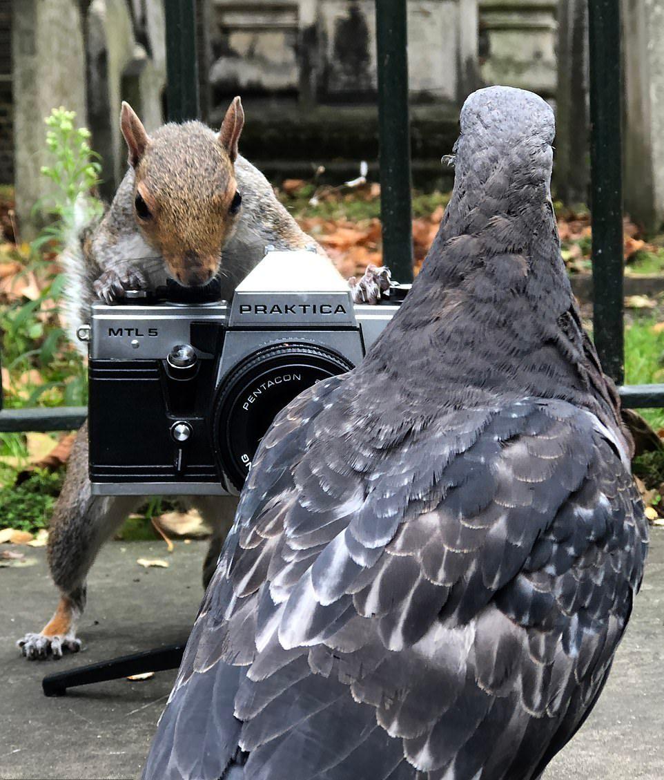 Белки фотографируют голубей в лондонском парке