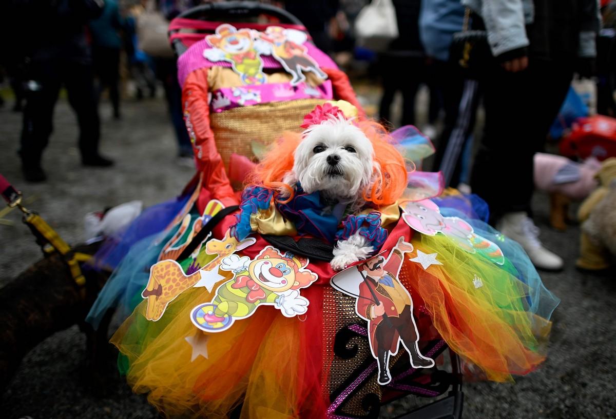 Хэллоуин-парад собак в Нью-Йорке (35 фото)