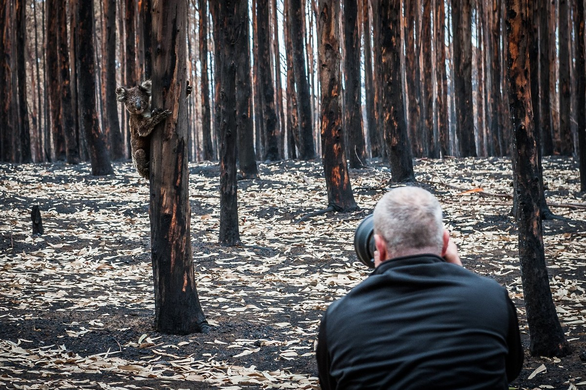 Фотограф документирует последствия пожаров в Австралии, чтобы собрать