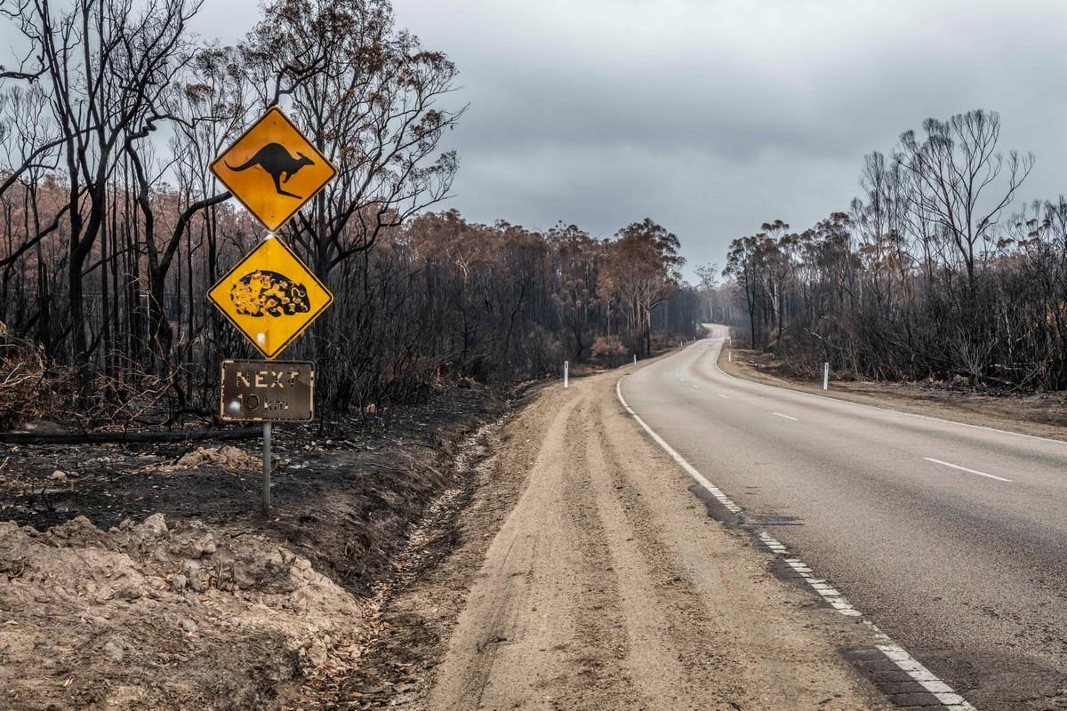 Беспилотники и тепловизоры: спасение коал, пострадавших в лесных пожарах