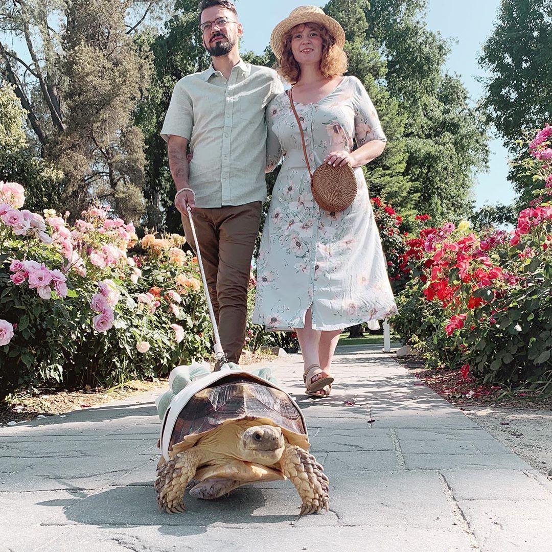 Пара наряжает любимую черепаху в оригинальные костюмы, но некоторые считают, что это издевательство