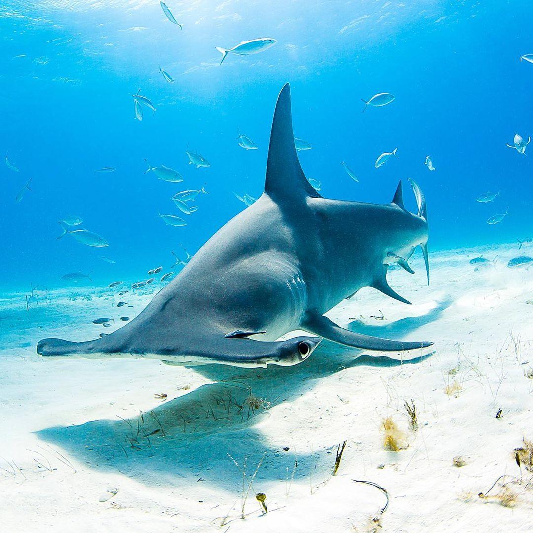 Замечательные подводные снимки Нади Али (25 фото)