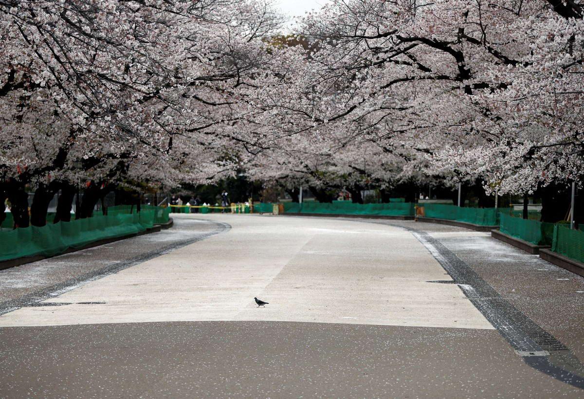 Весна пришла и зацвела сакура (30 фото)