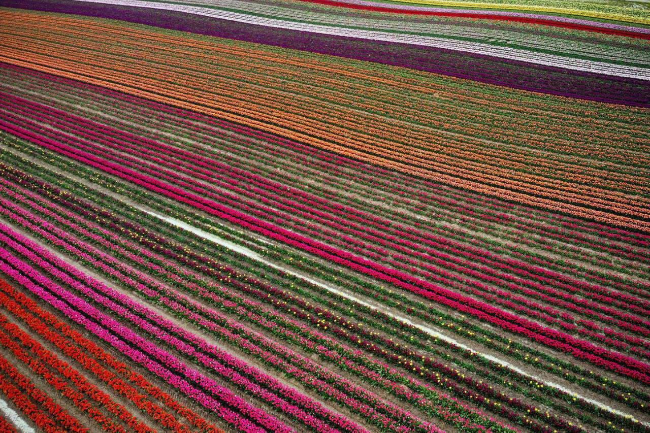 Потрясающее зрелище: цветущие поля в Германии и 50-й фестиваль тюльпанов в Швейцарии