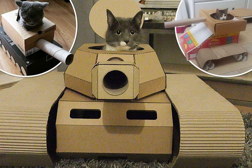 Боевые коты захватывают дома своих хозяев в картонных танках (фото+гифки)