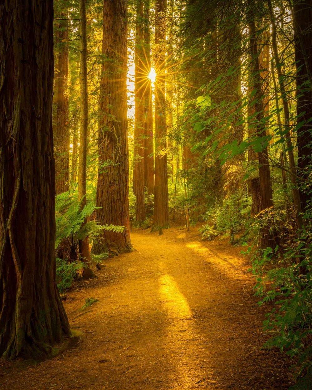 Красивые пейзажные фото Лори Винтер (25 фото)