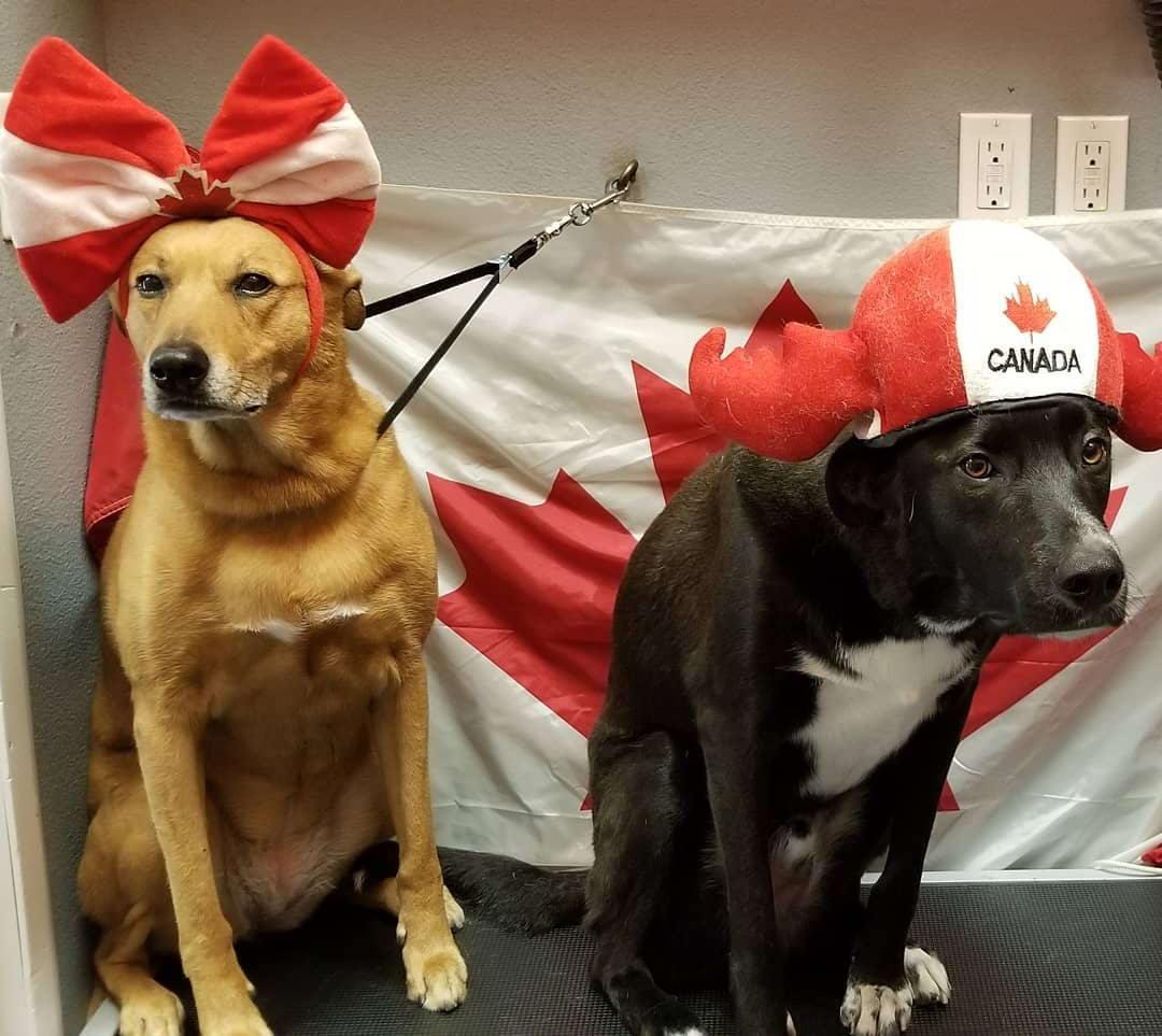 Красивые и веселые фотографии из Канады - 66 (45 фото)