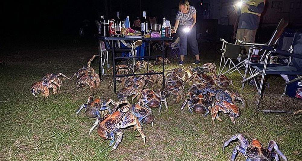 Семью окружили крупные крабы во время барбекю на австралийском острове...