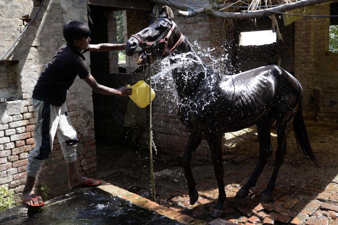 Повседневная жизнь в фото: Индия (18 фото)