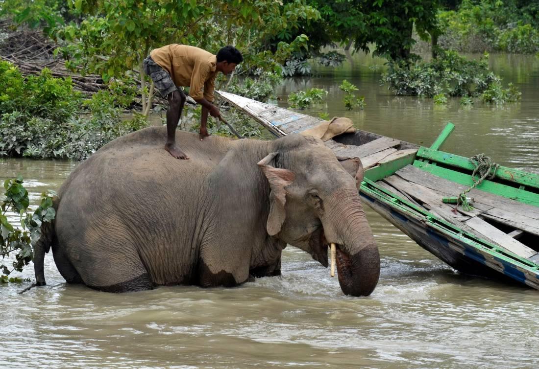 Повседневная жизнь в фото: Индия (45 фото)