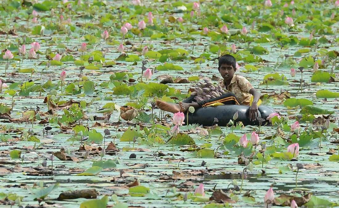 Повседневная жизнь в фото: Шри-Ланка (20 фото)