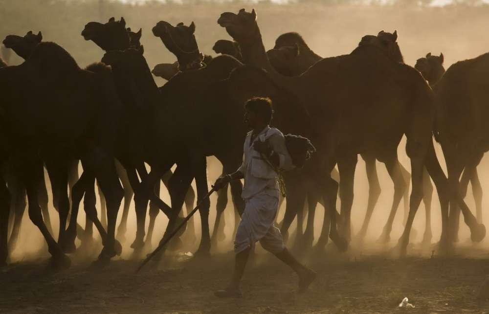 Повседневная жизнь в фото: Индия (32 фото)